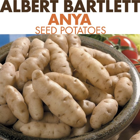 Seed Potatoes - Anya 1kg