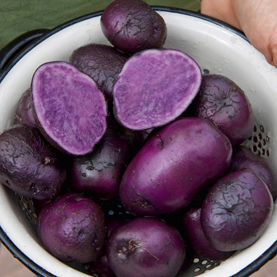 Seed Potatoes - Purple Majesty 1kg