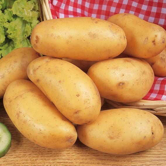 Salad Nicola (1kg)