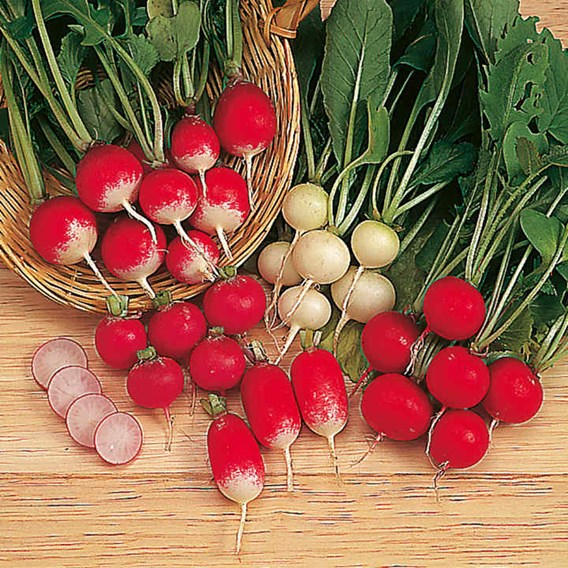 Seed Tape - Radish Rainbow Mix