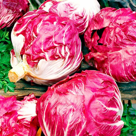 Radicchio Seeds - Mix