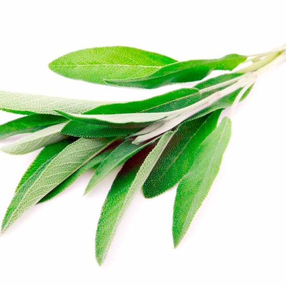 Herb Seed - Sage