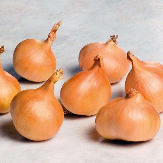 Bumper Autumn Planting Onion/Garlic/Shallot Collection