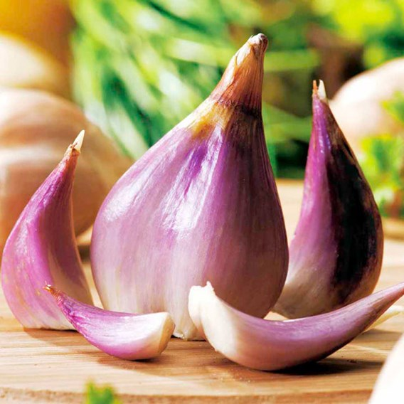 Shallot Twin Pack - Autumn