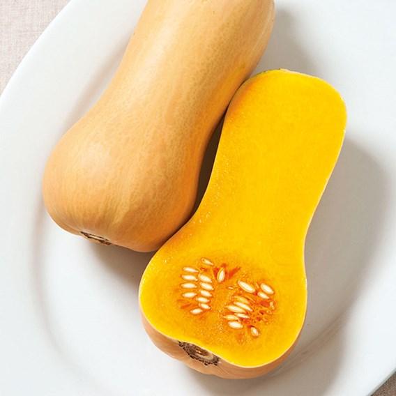 Butternut Squash Plants - Butterscotch