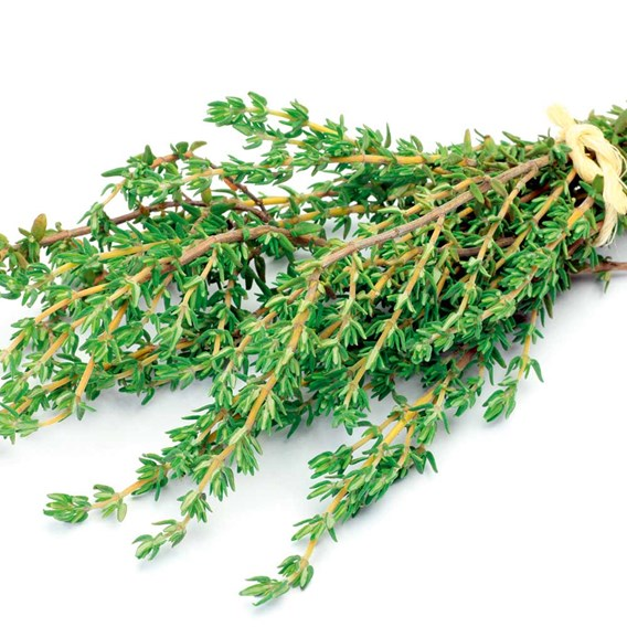 Herb Seed - Thyme Common
