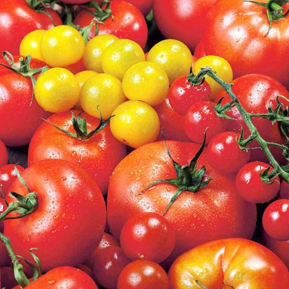 Tomato Seeds - Summer Sensation Mix