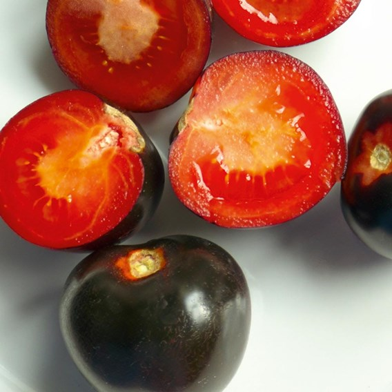Grafted Tomato Plant - The Black Tomato Indigo Rose