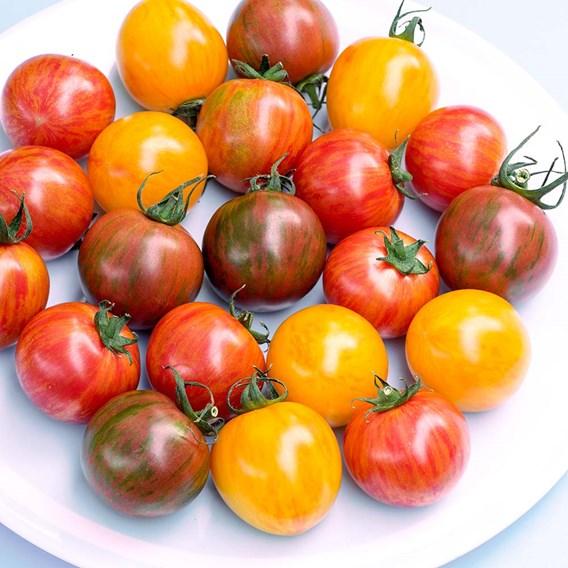 Tomato Seeds - Artisan Bumble Bee Mix