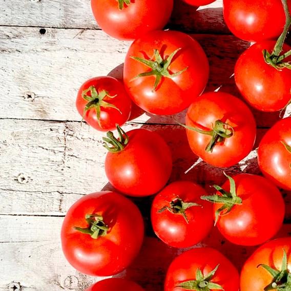 Tomato Grafted Heinz 1370 (3) P10