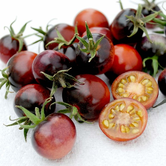 Tomato Grafted Blue Berries (3)