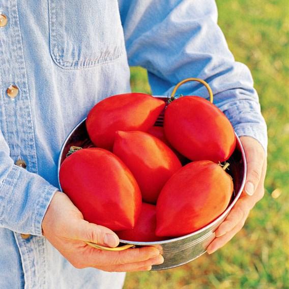 Tomato Seeds - Super Sauce F1