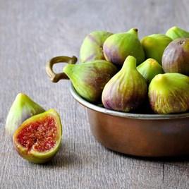 Fig (Ficus) Brunswick