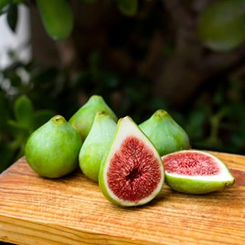 Fig (Ficus) Dalmatie (bush)