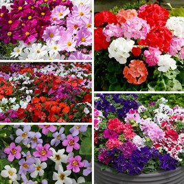 Best Selling 100 Summer Plants Collection
