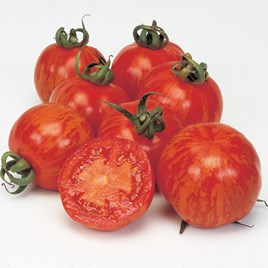 Grafted Tomato Plants - Lycostandard 3221