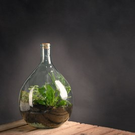 Terrarium Bottle 5L and Starter Kit