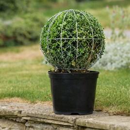 Ball Topiary Frame