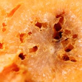 Carrot Root Fly Killer 50 Million
