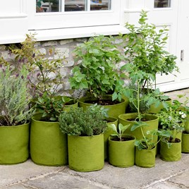 Vigoroot Pots and Planters