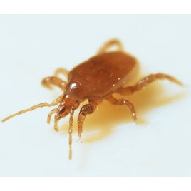 Biological Control - Mighty Mite 1000