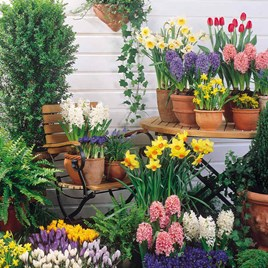 Our Selection Bulb Offer