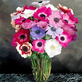 Anemone Seeds - Mona Lisa Mix F1