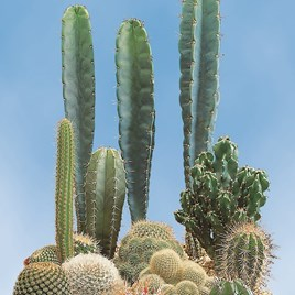Cactus Seeds - Prickly Characters