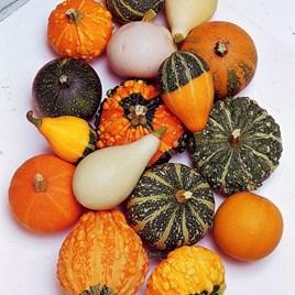 Gourd (Inedible) Seeds - Ornamental