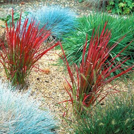 Green plants & flowering plants