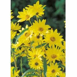 Sunflower Seeds - Year on Year