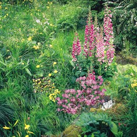 Wildlife Seeds - Shady Area Mix