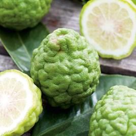 Citrus Plant - Kaffir Lime