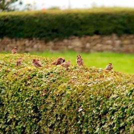 Wildlife Hedge