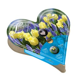 Plant-O-Tray Heart Preplanted Bulbs - Tulip & Muscari