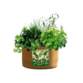 Vintage Herb Planters (Pack of 2)