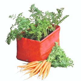 Carrot Planters (Twin Pack)