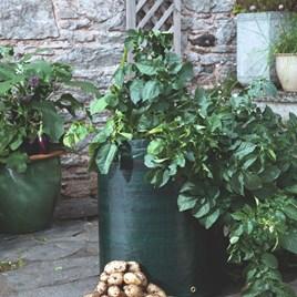 Seed Potatoes - Patio Potato Growing Kit