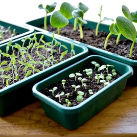 Seed Trays - Quarter Size