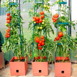 Tomato Success Kit