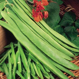 Bean (Runner) Seeds - Polestar
