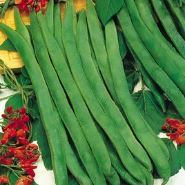 Bean (Runner) Seeds - Prizewinner