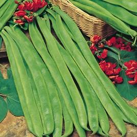 Bean (Runner) Seeds - Best Of All