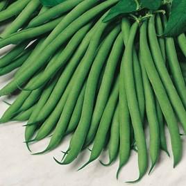 Bean (Dwarf French) Seeds - Safari