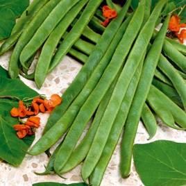 Bean (Runner) Seeds - Armstrong