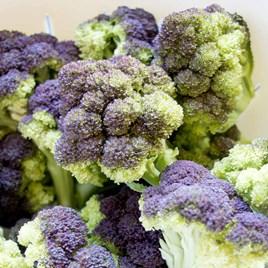 Jacaranda Broccoli Plants