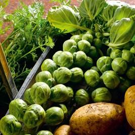 Brussels Sprout Seeds - Bedford-Fillbasket