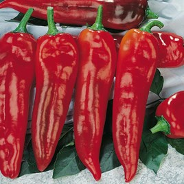 Pepper Sweet Seeds - Corno di toro rosso