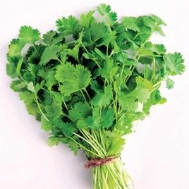 Herb - Coriander Cilantro