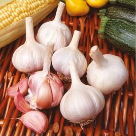 Garlic Bulbs - Flavor